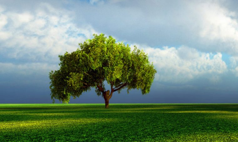 cropped-green-forest-and-clouds-website-header.jpg